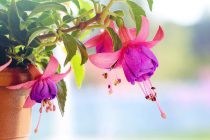 Zo kies je de juiste planten voor je tuin