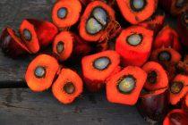 Wat is palmolie en waar zit het in?